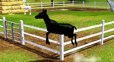 black deer by MagicWindsStables