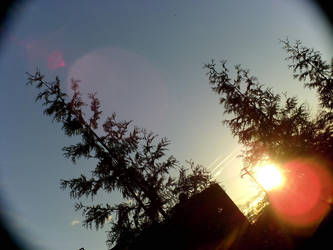 Trees glow by Star121