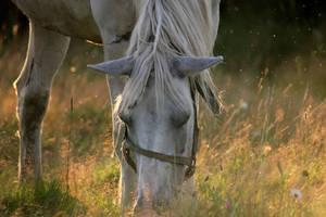 horse by Ventana-Graff