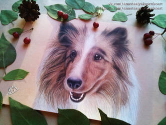 Commission - Beautiful dog by AnastasiyaKosenko