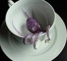 Teacup Octopus by fairchildart