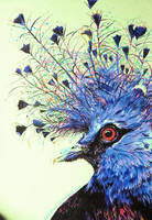 Victorian Crowned Pigeon by kDdabous