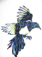 European Magpie by kDdabous