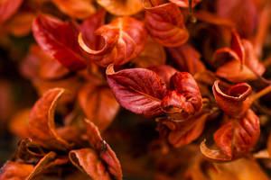 Colors of Autumn II by EyeOfTheKat