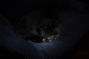 Cat in the Dark by EyeOfTheKat