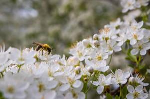 Spring Buzz by EyeOfTheKat