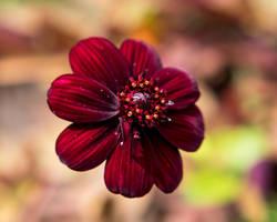 Red Beauty by EyeOfTheKat