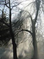 smoky tree by IskraM