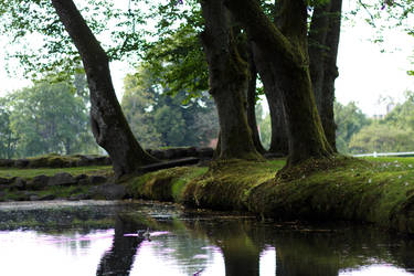 Trees by the Water by VictorCS