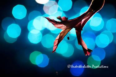 Flower Star by GKmon-DORU-fanatic