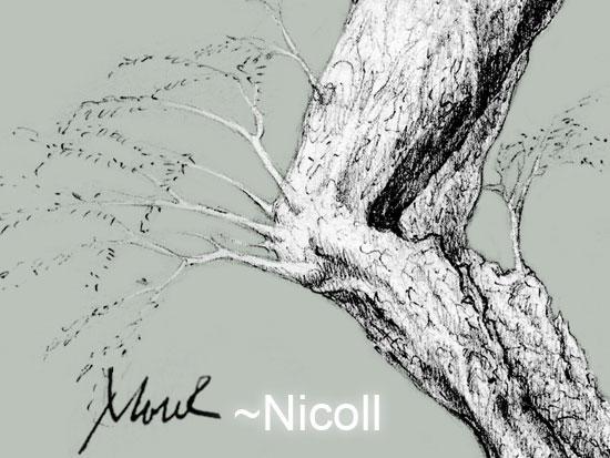 Nicoll's Profile Picture
