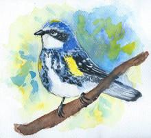 #3 Yellow-rumped warbler by Oliuszka
