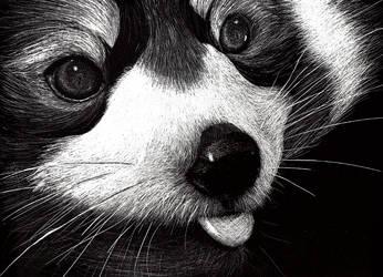 Red Panda by SergeantFruitfly