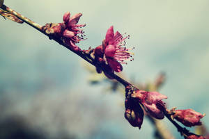 Flavour of spring by Sugar-Sugar-Bee