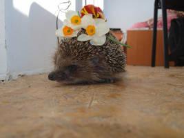 The hedgehog and flowers V by Sugar-Sugar-Bee