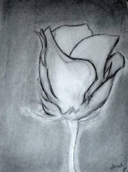 Charcoal Graphite Rose by SomeAssemblyReq