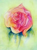 Rose by squalljade
