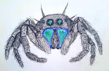 Jay Jumping Spider by AnimeVeteran