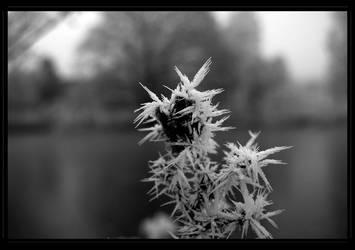 Cette fleur sur glace... by favocal