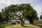 tree002 by ov3
