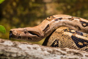 Snake001 by ov3