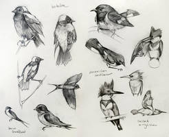 Bird Studies 1 by yolque