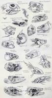 Fish Skull Studies by yolque