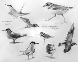 Bird Studies 2 by yolque