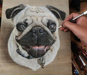 Pug Drawing. by ivanhooart