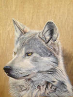 Wolf Painting by ivanhooart