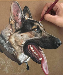 German Shepherd Dog In Progress by ivanhooart