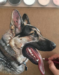 German Shepherd Dog by ivanhooart