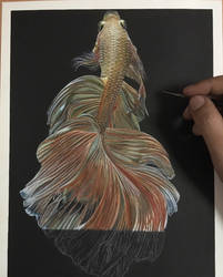 Siamese Fighting Fish In Progress by ivanhooart