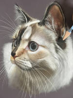 phoebe the cat by ivanhooart