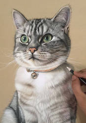 Eric The Silver Tabby by ivanhooart