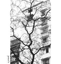 the tree by earam