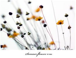 summer flowers by earam