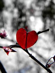 Bleeding Passion by NatureRaven
