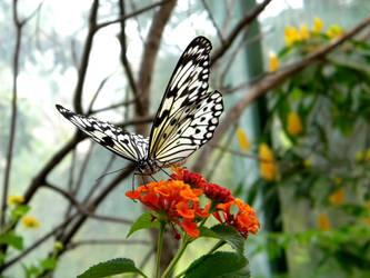 Vivacious by NatureRaven