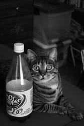 Meow...Mine by Frunk-Fotography