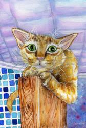 Red cat by Alexsiel