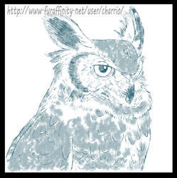 Avian Practice, Owl by charrio