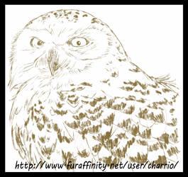 Avian Practice, Owl 02 by charrio