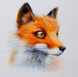 Fox~  color pencils by Nadia-Lee-Nyan
