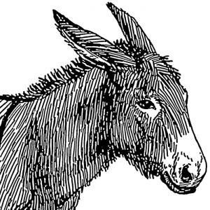 Boldewyn's Profile Picture