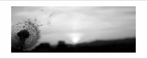 la sottile linea bianca by RosenrotEffect