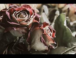 Dry roses by wojtar