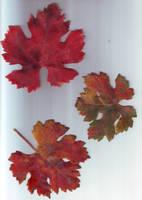 feuilles d'automne 1 by LiaVilore