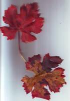 feuilles d'automne 2 by LiaVilore