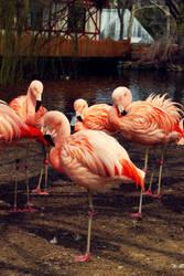 Flamingo 02. by DevinMarisa